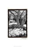 Springtime Garden VI Premium Giclee Print by Laura Denardo