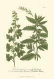 Leaves III Poster von Johann Wilhelm Weinmann