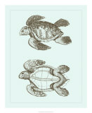 Loggerhead Turtles II Giclee Print