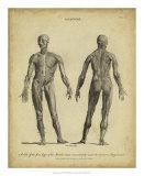 Anatomy Study IV Giclee Print by Jack Wilkes