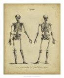 Anatomy Study I Giclee Print by Jack Wilkes