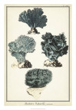 Coral Species I Giclee Print