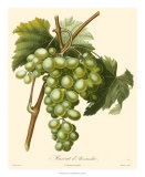 Grapes I Print by Bessa 