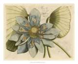 Blue Lotus Flower I Giclee Print
