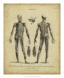 Anatomy Study II Giclee Print by Jack Wilkes