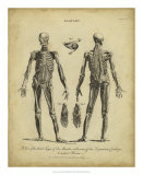 Anatomy Study II Posters by Jack Wilkes