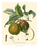 Pears Giclee Print by  Bessa