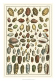 Seba Shell Collection VI Giclee Print by Albertus Seba