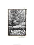 Springtime Garden III Premium Giclee Print by Laura Denardo