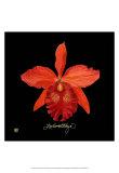 Vivid Orchid IX Poster by Ginny Joyner
