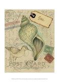 Postcard Shells II ポスター : ナンシー・シューメイカー・パラン