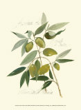 Ascolane Olives Prints by Elissa Della-piana