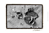 Sand Treasures II Prints by Laura Denardo