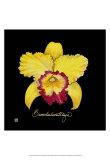 Vivid Orchid VII Prints by Ginny Joyner