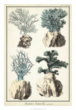 Coral Species III Giclee Print