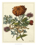 Floral Posy III Giclee Print by Giovanni Ferrari