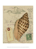 Postcard Shells I Prints by Nancy Shumaker Pallan