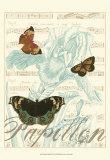 Papillon Melange III Prints