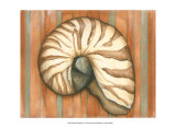 Shell on Stripes IV Prints by Laura Nathan