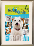 Hotel for Dogs Photo