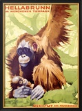 Munich Zoo, Ape Framed Giclee Print