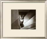 Cat in the Stairs Art by Marie Babey