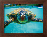 Honu, Turtle Framed Giclee Print by Kirk Lee Aeder