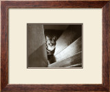 Cat in the Stairs Prints by Marie Babey