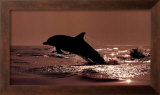 Delphinus Delphis Prints by Bob Talbot