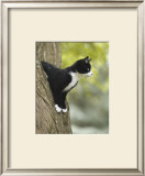 Attentive Cat Prints by Jean-Michel Labat