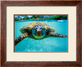 Honu, Turtle Art by Kirk Lee Aeder