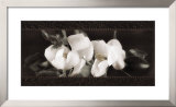 Soft Magnolias II Prints by Christine Elizabeth