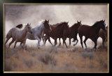 Grassland Herd Posters by David R. Stoecklein