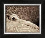 Dog Tired Prints by Jim Dratfield