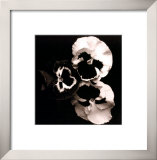 Pansies Prints by Angelos Zimaras