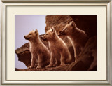 Wolf Pups Prints by Jim Brandenburg