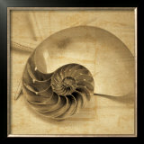 Chambered Nautilus Prints by John Seba