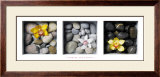 Flowers and Stones Posters by Dave Brullmann