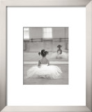 Little Ballerina Poster by David Handley