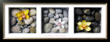 Flowers and Stones Prints by Dave Brullmann