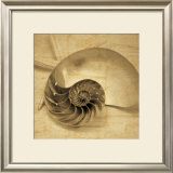 Chambered Nautilus Art by John Seba