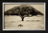 The Sheltering Tree, Serengeti Print by Lorne Resnick