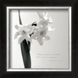 Daffodil Secrets Posters by Deborah Schenck