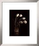 Dramatic Tulips Prints by Dick &amp; Diane Stefanich