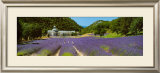 Sault - Provence Prints by Paul Franklin