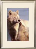 Wolf Harmony Prints by Jim Brandenburg