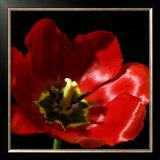 Shimmering Tulips I Prints by Renee Stramel