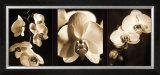 Orchid Trio Prints by Caroline Kelly