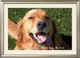 Joyful Doggie Poster
