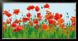 Poppy Fields Prints by Jan Lens